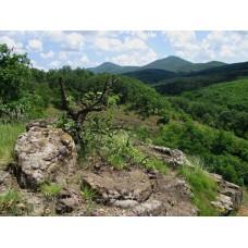 Csevice-völgy