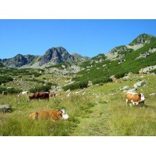 Alpesi idill a Pietrele-völgyben