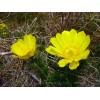 Tavaszi hérics #2